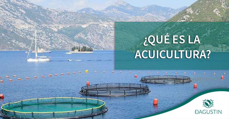acuicultura distribuidoras pescado